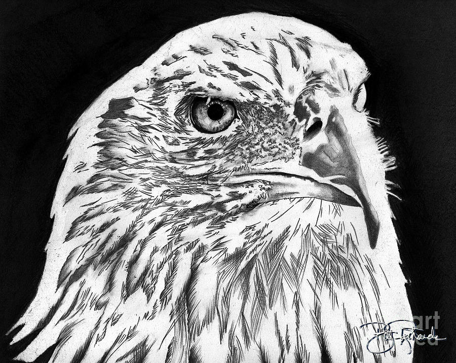 Bald Drawing - American Bald Eagle by Bill Richards