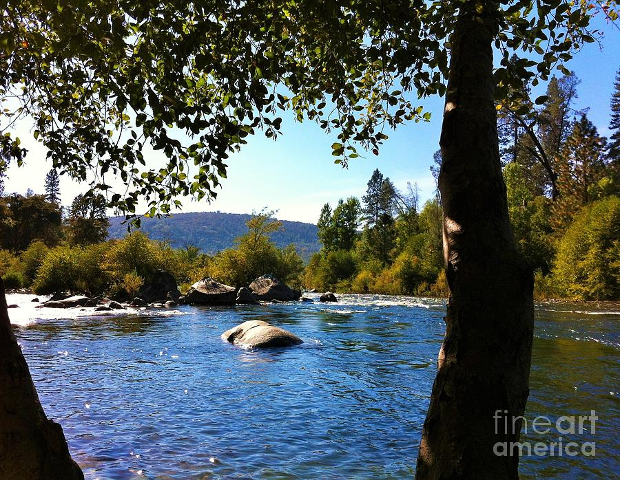 Scenic Photograph - American River Through The Trees by Flo DiBona