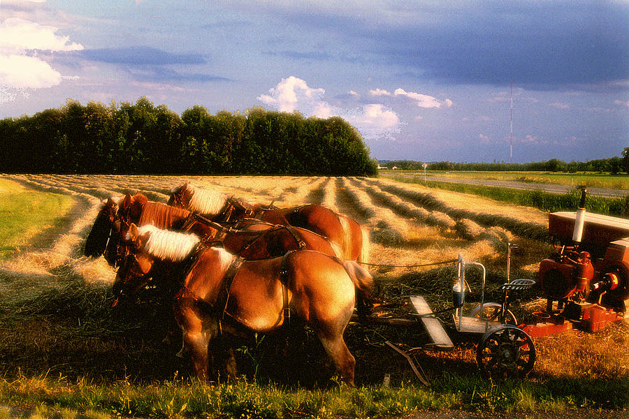 Harvest Photograph - Amish Hay Rig by Roger Soule