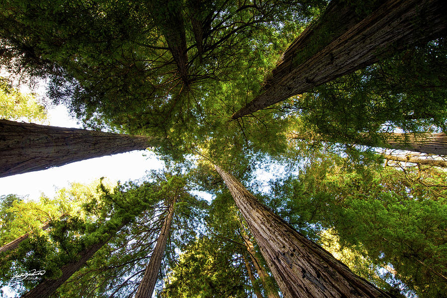 Redwoods Photograph - Amoung Giants  by Rowdy Winters