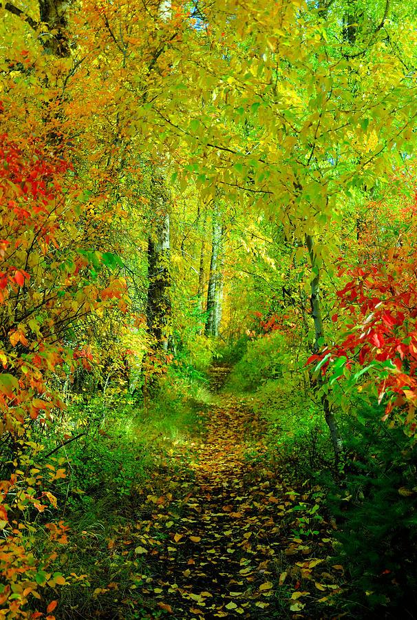 An Autumn Path Photograph