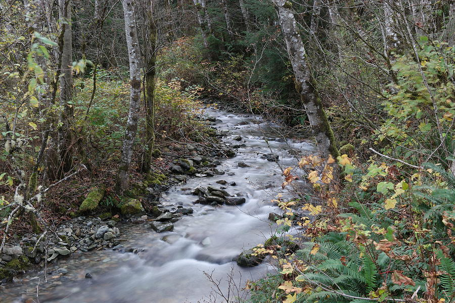 River Photograph - An Autumn Stream by Jeff Swan