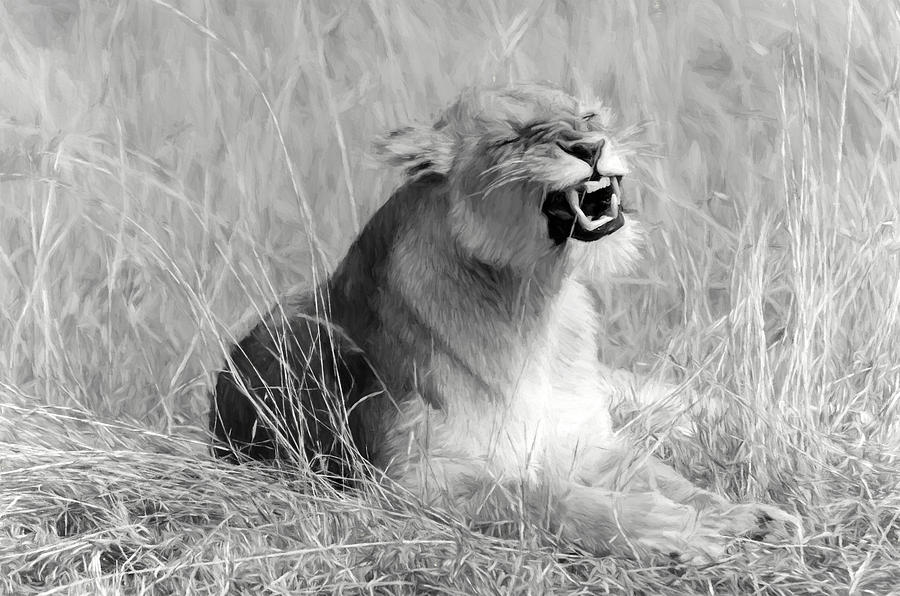 Animal Digital Art - Angry Lioness by Pravine Chester