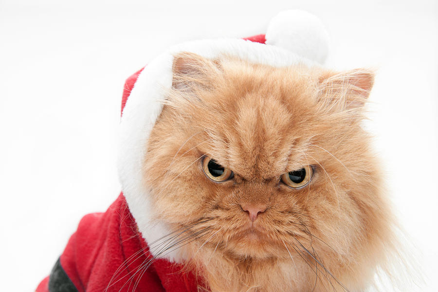 angry santa cat photograph by hulya ozkok