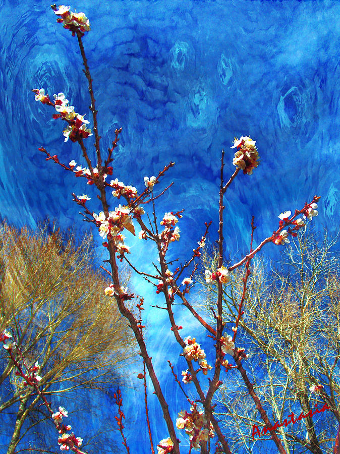 El Valle Photograph - Apricot Blossoms El Valle by Anastasia Savage Ealy