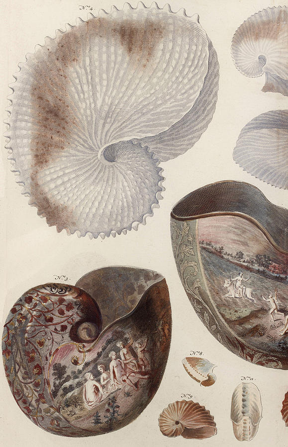 Aquatic Animals - Sea - Shells - Composition - Alien - Wall Art  - Interior Decoration  Drawing by Art Makes Happy
