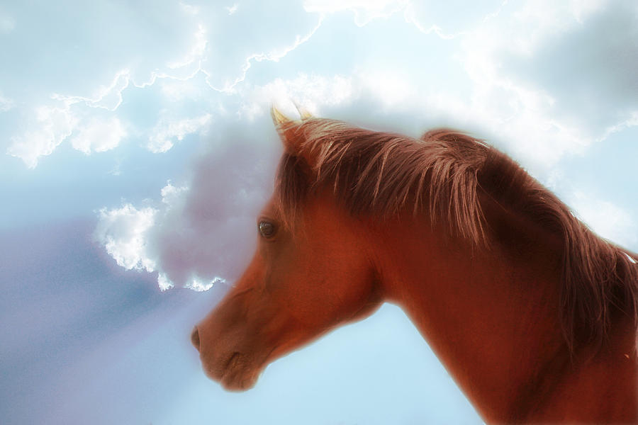 Horse Photograph - Arabian Stallion by ELA-EquusArt