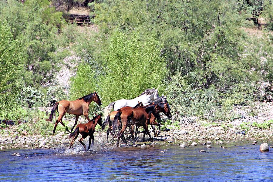 Arizona Wild Horses by Matalyn Gardner