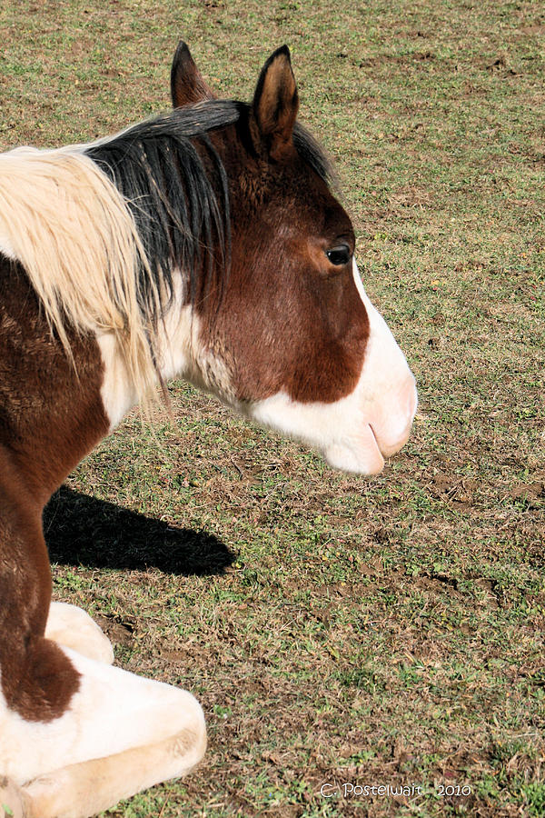 Horse Photograph - At Rest by Carolyn Postelwait