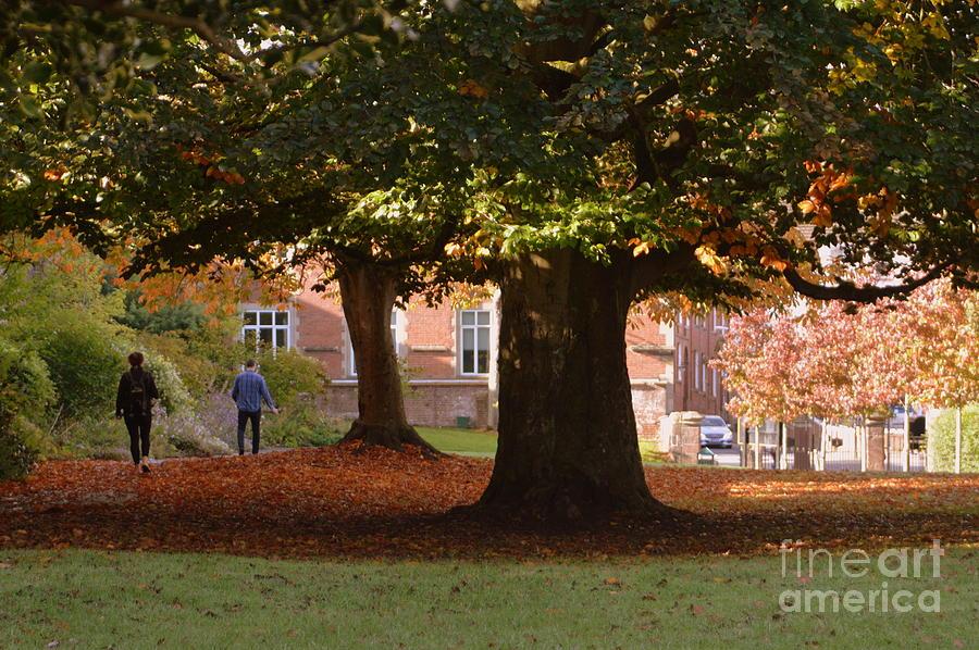 Autumn Photograph - Autumn by Andy Thompson