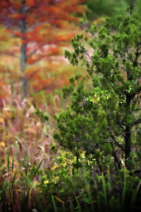 Autumn Colors 20 Photograph by Scott Fracasso