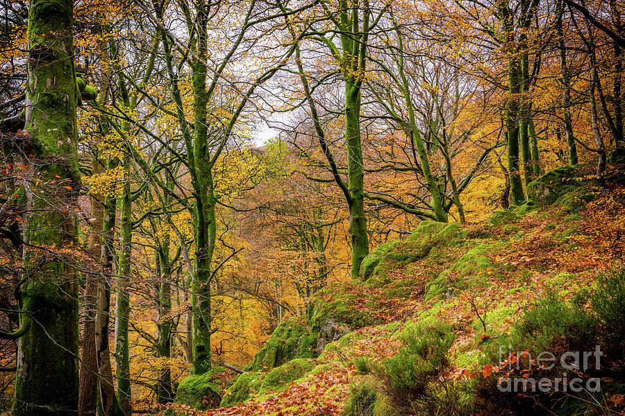 Fall Photograph - Autumn Colours by Adrian Evans