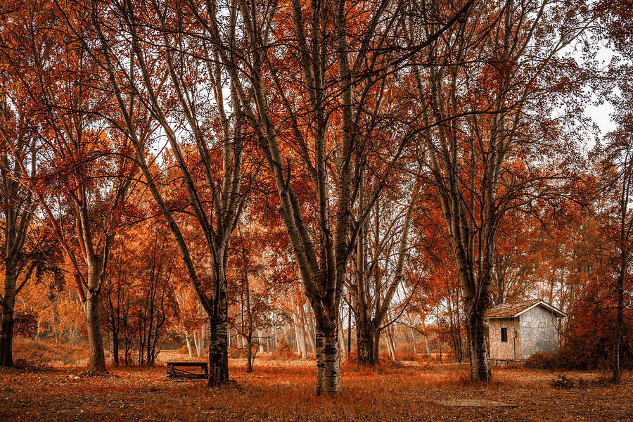 Scenic Photograph - Autumn Forest 1 by Ioannis Vasilakakis