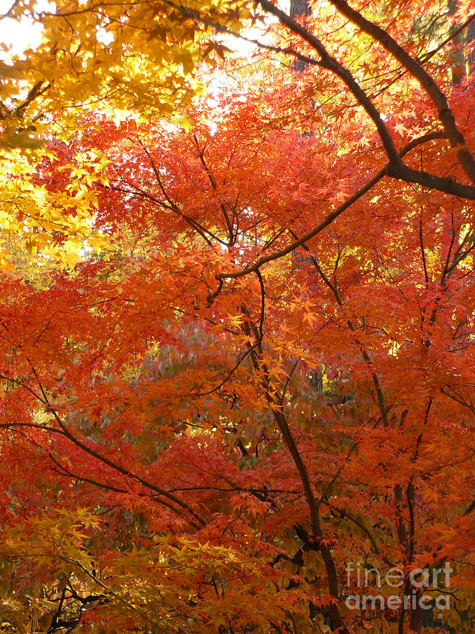 Autumn Photograph - Autumn Gold by Carol Groenen