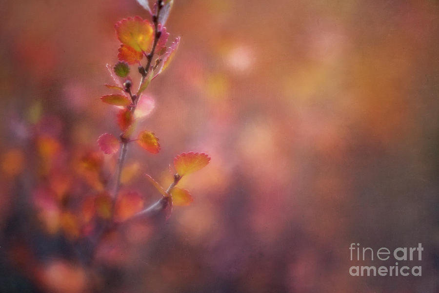 Red Photograph - Autumn Gold by Priska Wettstein