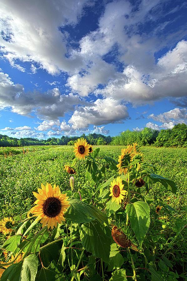 Sunflowers Photograph - Autumn Is Near by Phil Koch