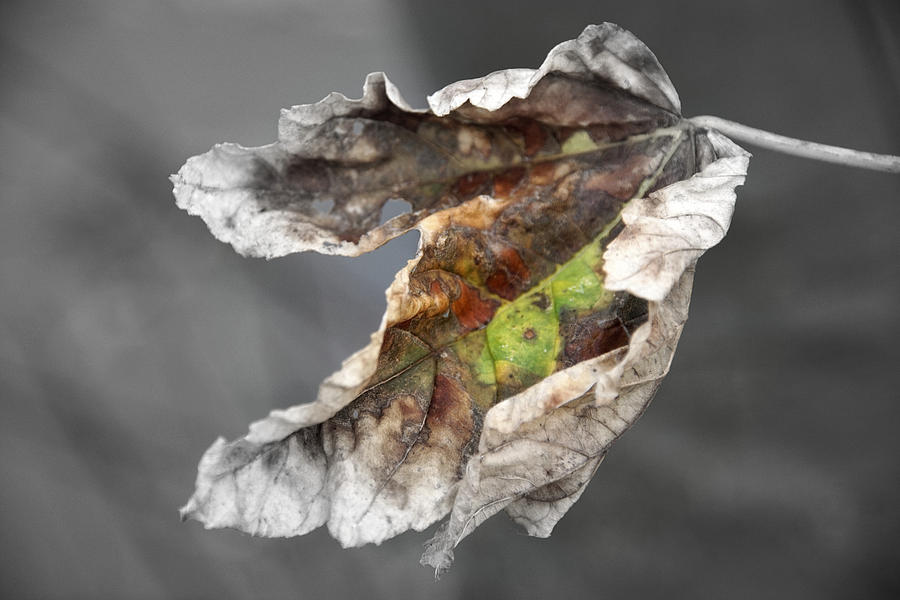 autumn leaf by Jolly Van der Velden