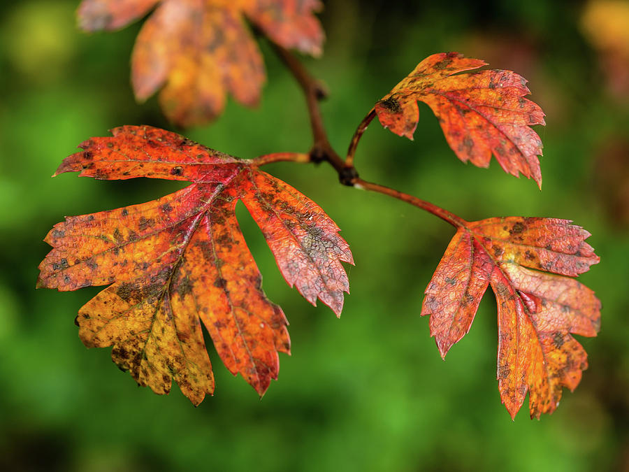 Autumn Photograph - Autumn Leaves by Nick Bywater