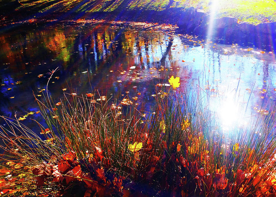 Autumn Pond Reflection by Roger Bester