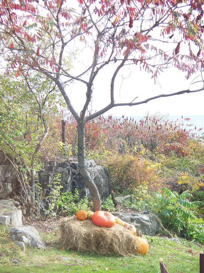 Autumn Photograph - Autumn by Rosanne Bartlett