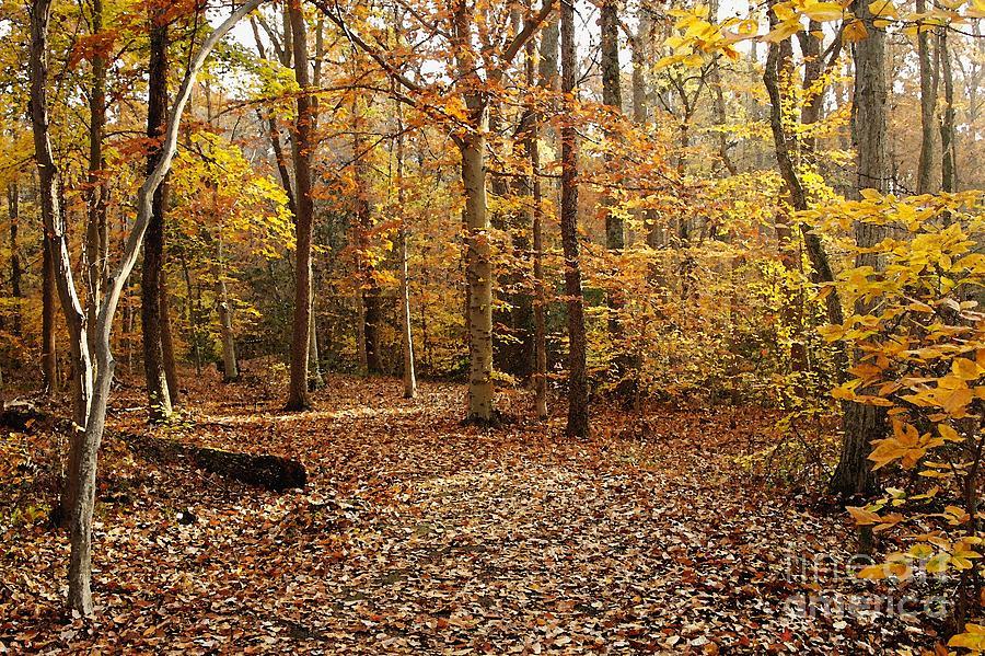 Autumn Photograph - Autumn Scenery 2 by Hideaki Sakurai