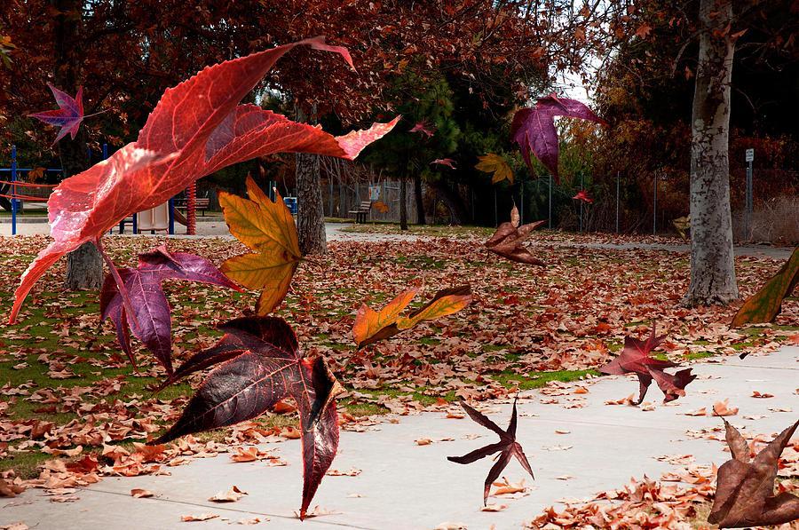 Landscape Photograph - Autumn Wind by Richard Gordon