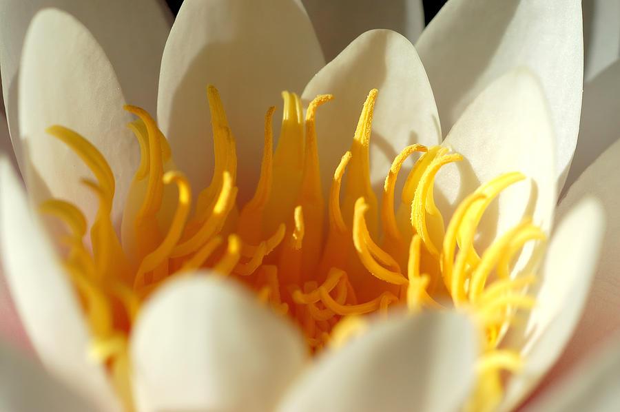 Flora Photographs Photograph - Awakening by Nataliya Dmitrieva