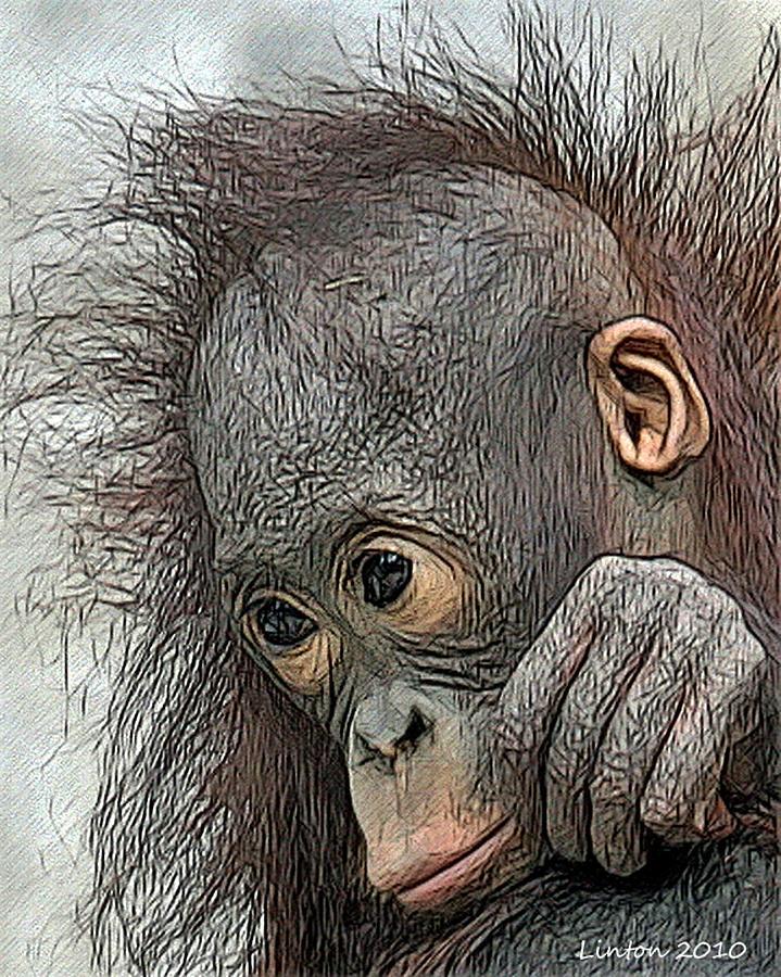 Orangutan Digital Art - Bad Hair Day by Larry Linton