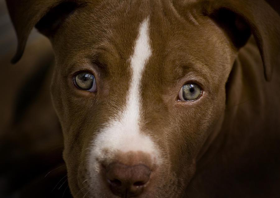 Puppy Photograph - Bailey by Tito Santiago