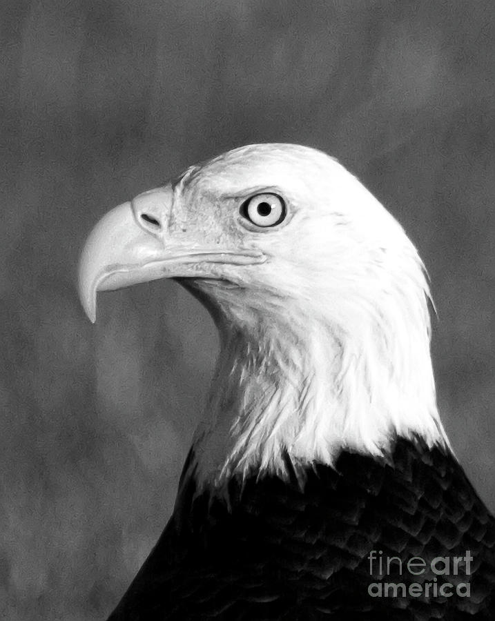 Eagle Photograph - Bald Eagle Portrait by Rodney Cammauf