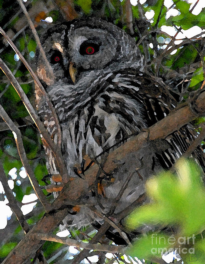 Barred Owl Painting - Barred Owl  by David Lee Thompson