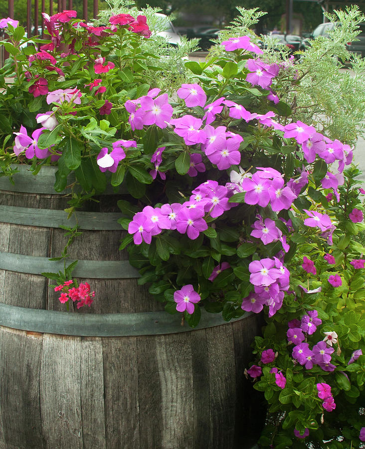 Barrel of flowers by Brian Kinney