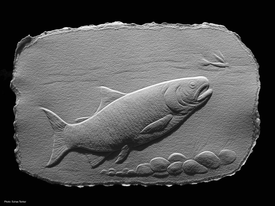Fish Relief - Bass Fish by Suhas Tavkar