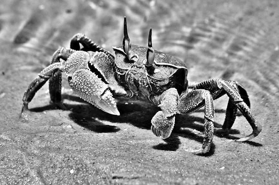 Bazaruto Crab by Jeremy Hayden
