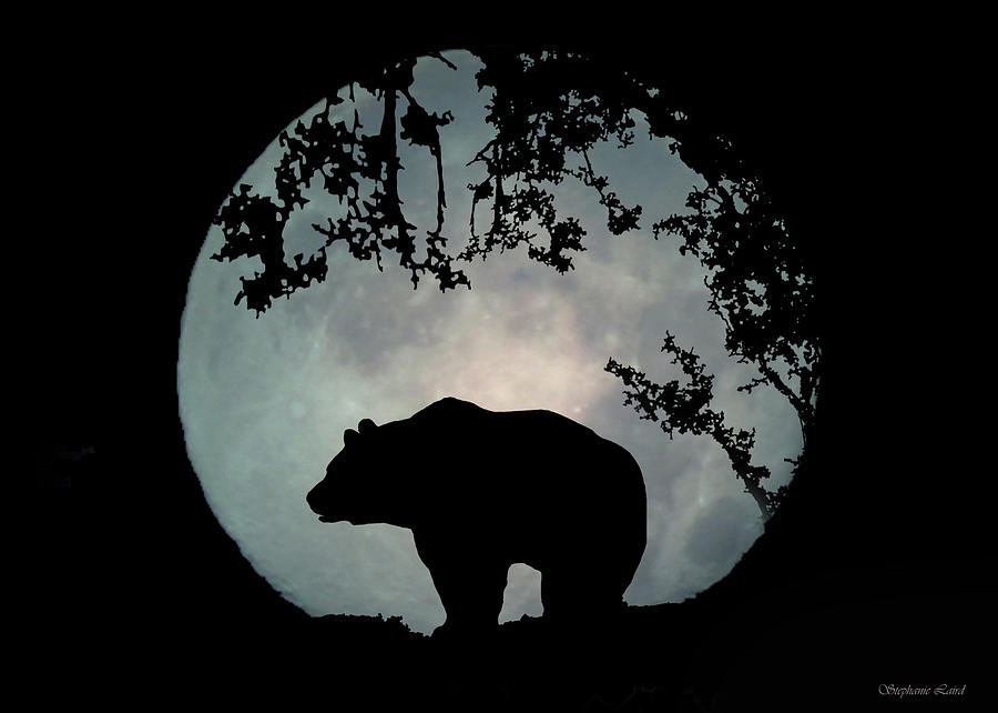 Bear Photograph - Bear and Moon by Stephanie Laird