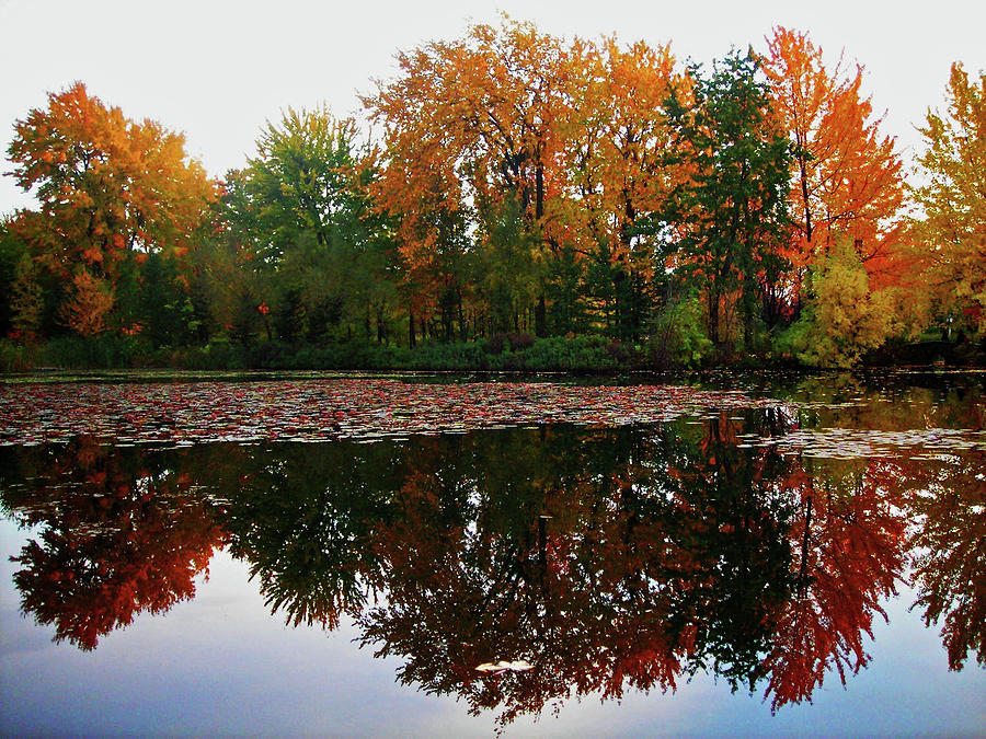 North America Photograph - Beautiful Fall ... by Juergen Weiss