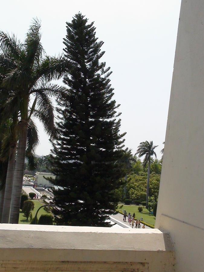 Trees Photograph - Beautiful Trees At Mughal Garden by Lalitmohan Khungar