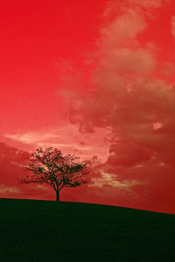 Beauty Photograph - Beauty Stands Against The Terrible Sky by Dawn Richerson
