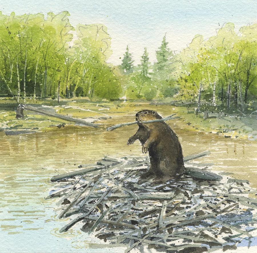 Beaver Painting - Beavers by Denny Bond