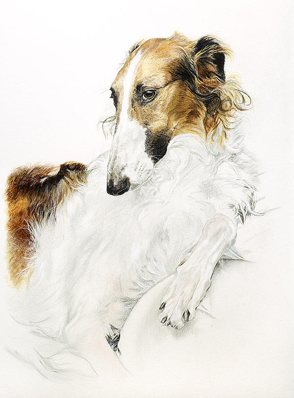 Dog Portrait Painting - Bela by Tricia Kittredge