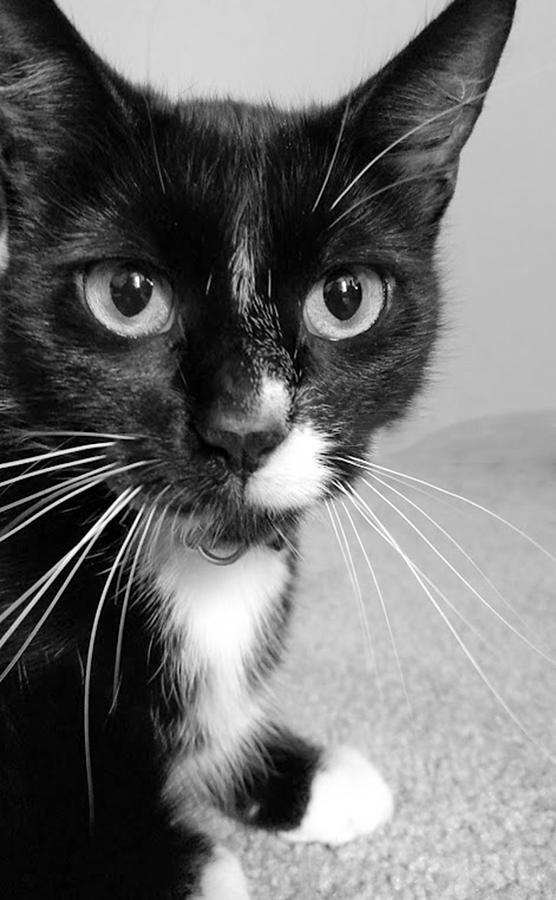 Cat Photograph - Bella The Cat by Danielle Allard