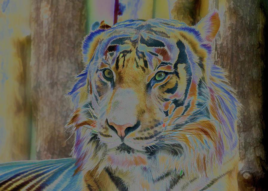 Abstract Photograph - Bengal Tiger by Robert Kinser
