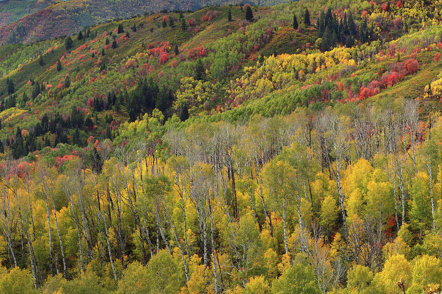Guardsman Pass Photograph - Big Cottonwood Canyon Fall Colors by Dean Hueber