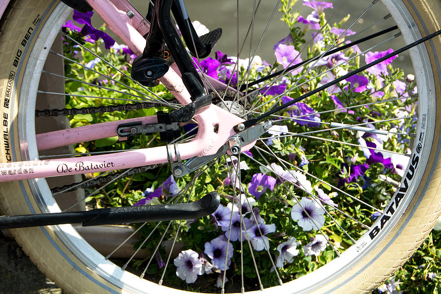 Bike and flowers by Adriana Zoon