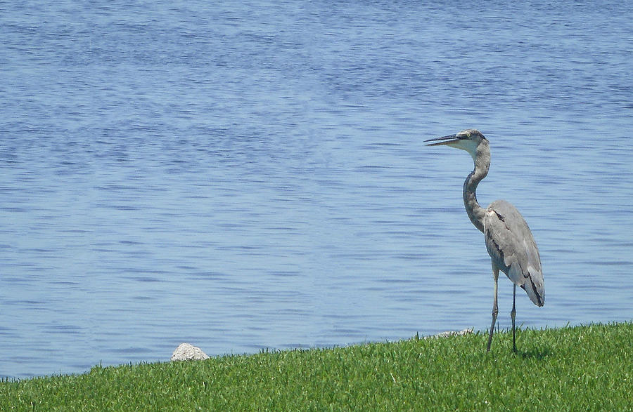 Bird by the Bay by Thomas J