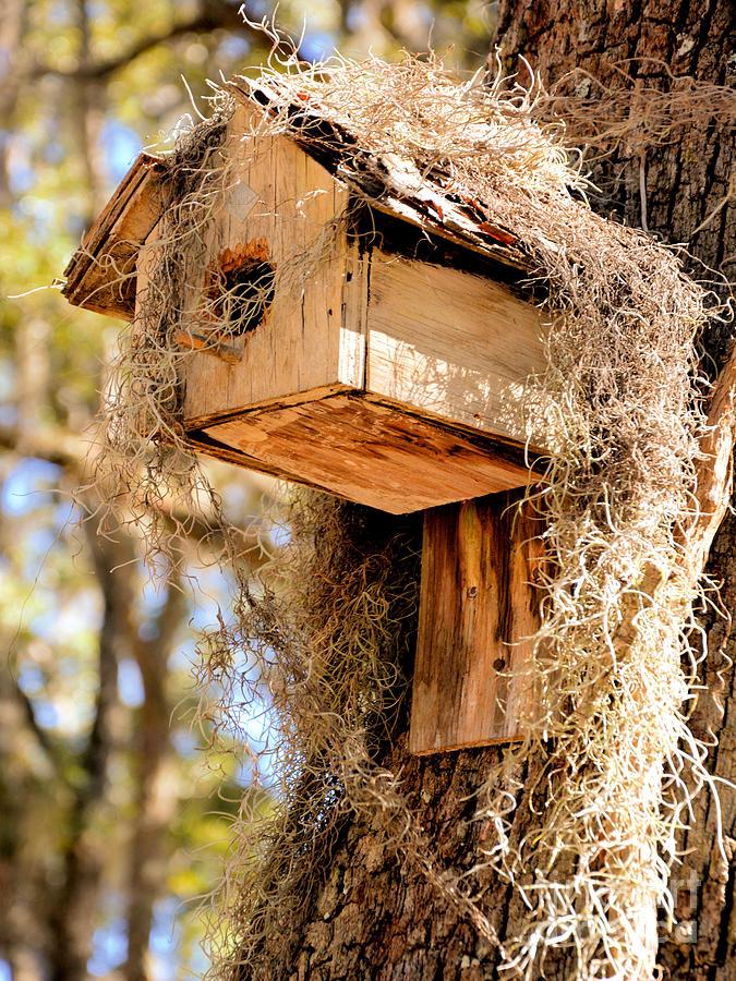 Bird House Photograph
