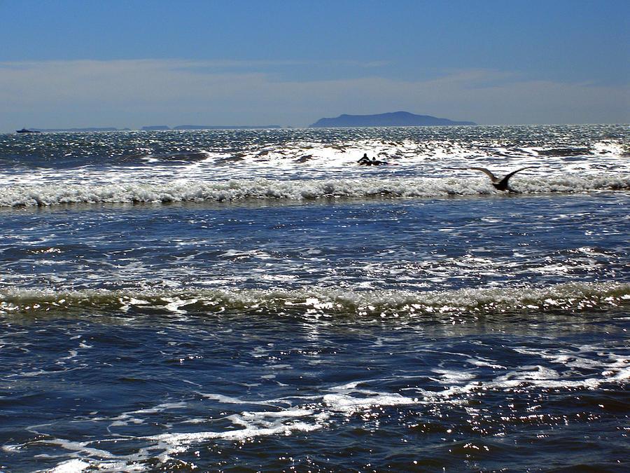 Beach Photograph - Bird On A Wave  by Robin Hernandez