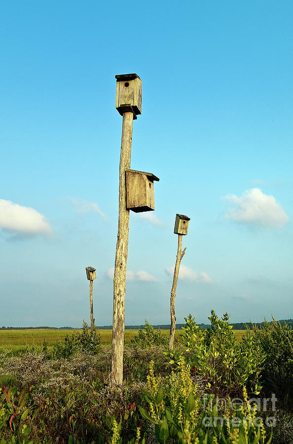 Cape Cod Photograph - Birdhouses In Salt Marsh. by John Greim