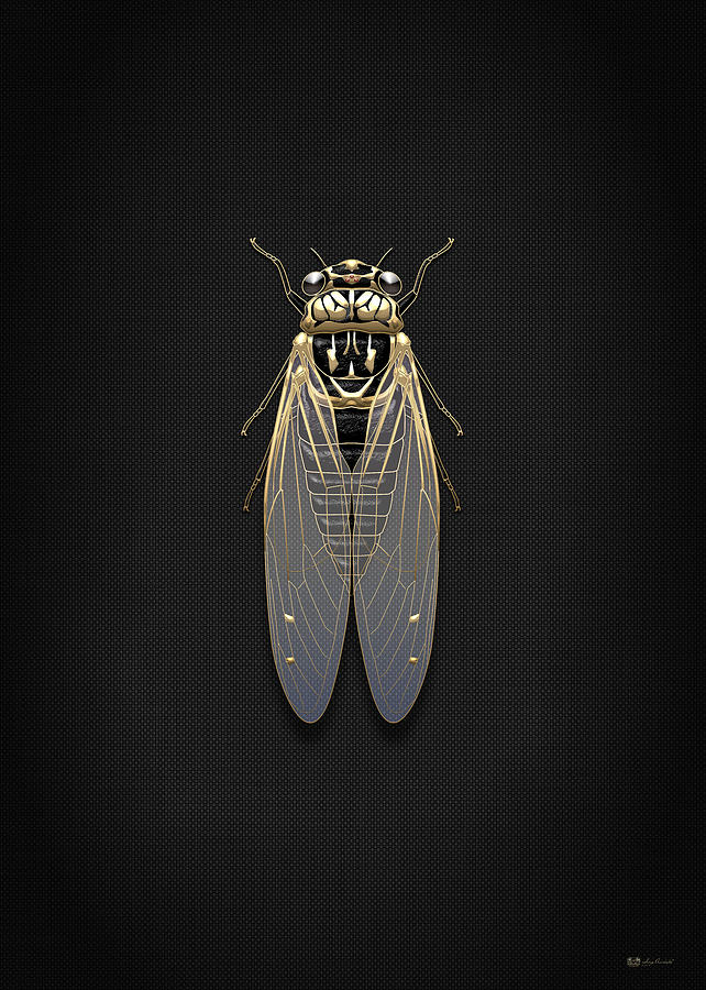 Cicadas Photograph - Black Cicada with Gold Accents on Black Canvas by Serge Averbukh