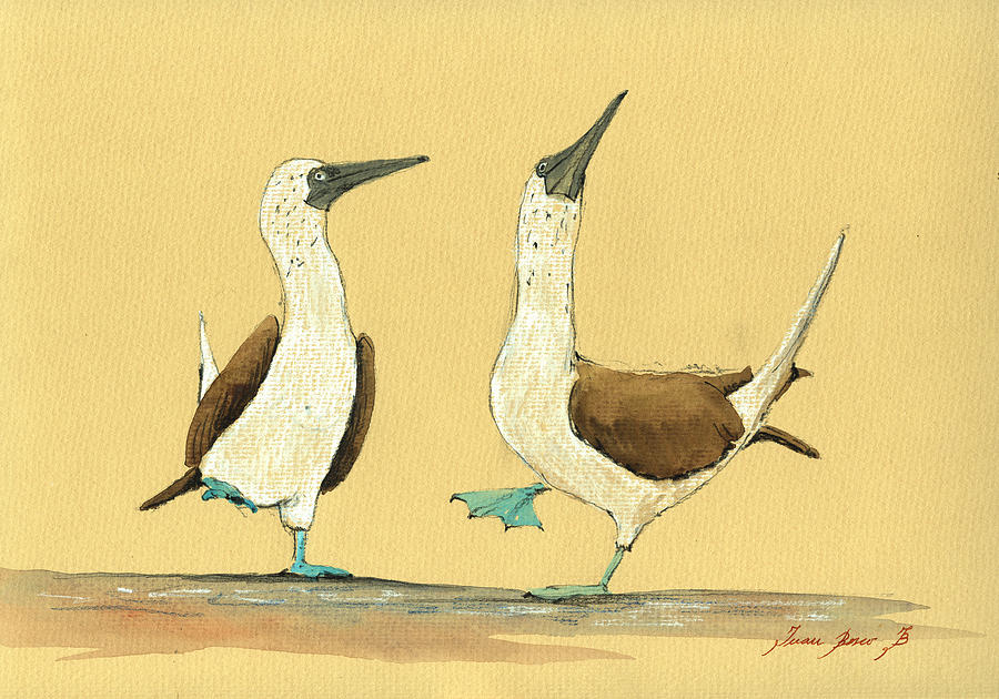 Blue Footed Boobies Painting - Blue footed boobies by Juan  Bosco